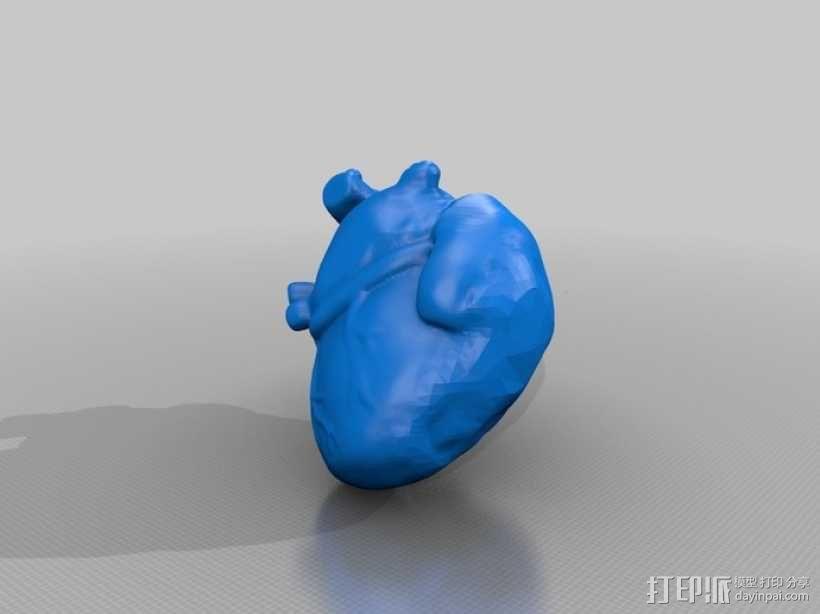 心脏解剖实物模型 3D模型  图1