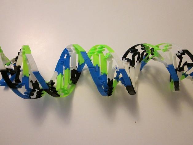 生物学 DNA螺旋 3D模型  图7