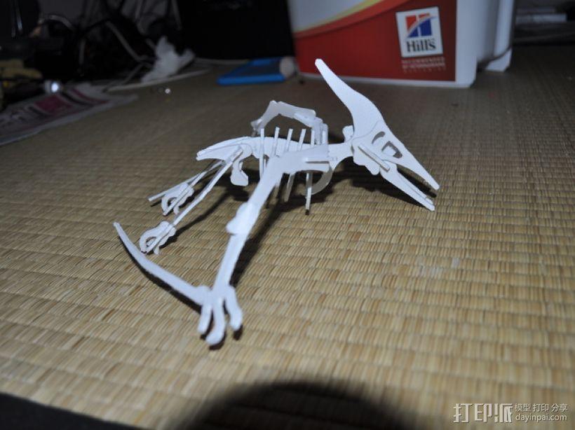 恐龙骨架模型 3D模型  图1