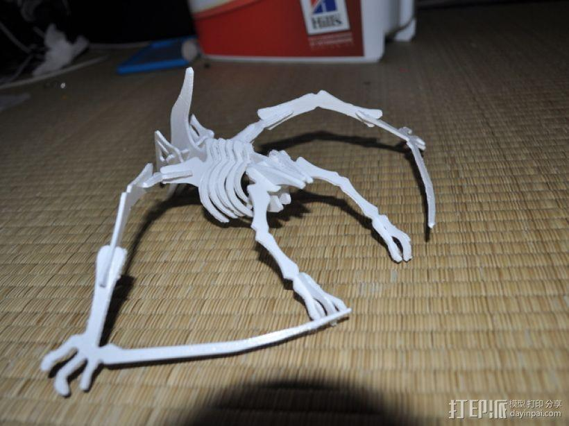 恐龙骨架模型 3D模型  图6