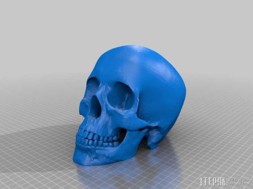 人头头骨 3D模型  图2