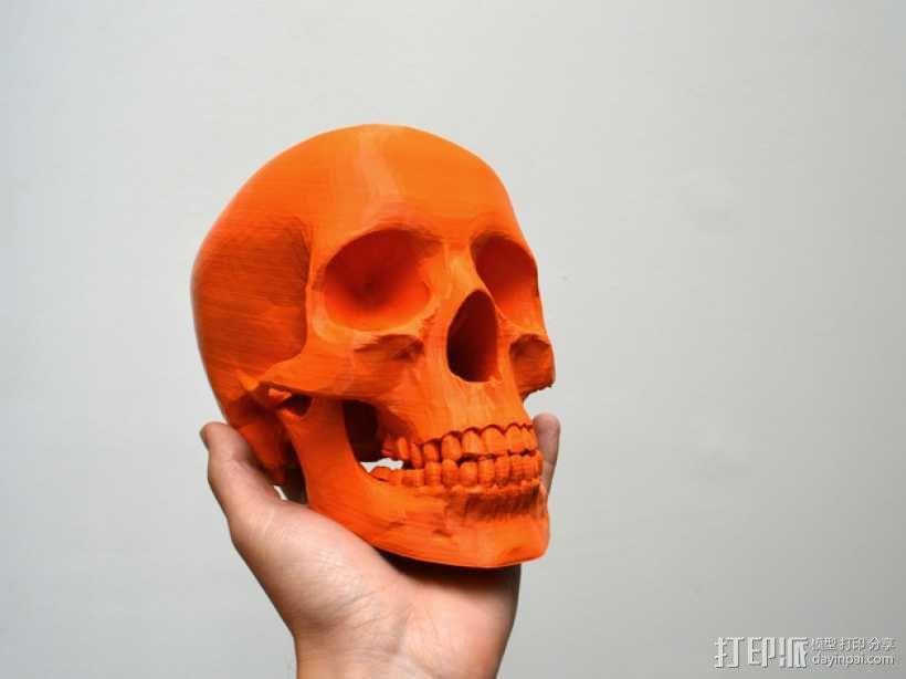 人头头骨 3D模型  图1
