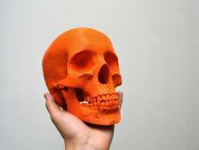 人头头骨 3D模型