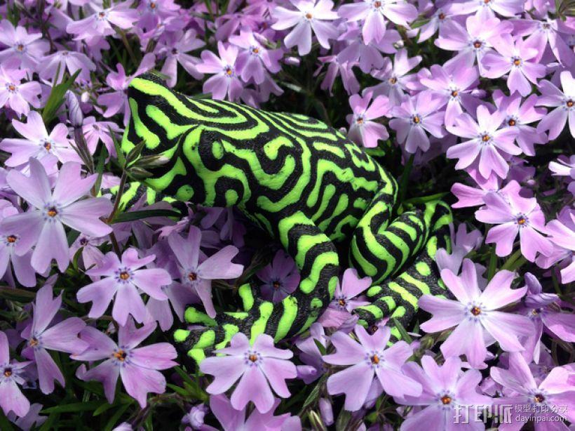 双色雨蛙 树蛙 3D模型  图5