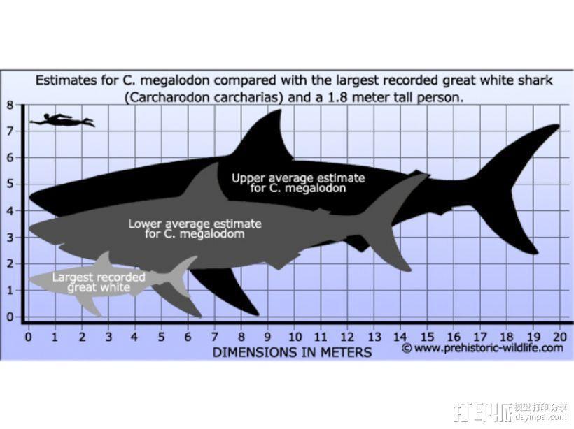 大鲨鱼牙齿 3D模型  图2