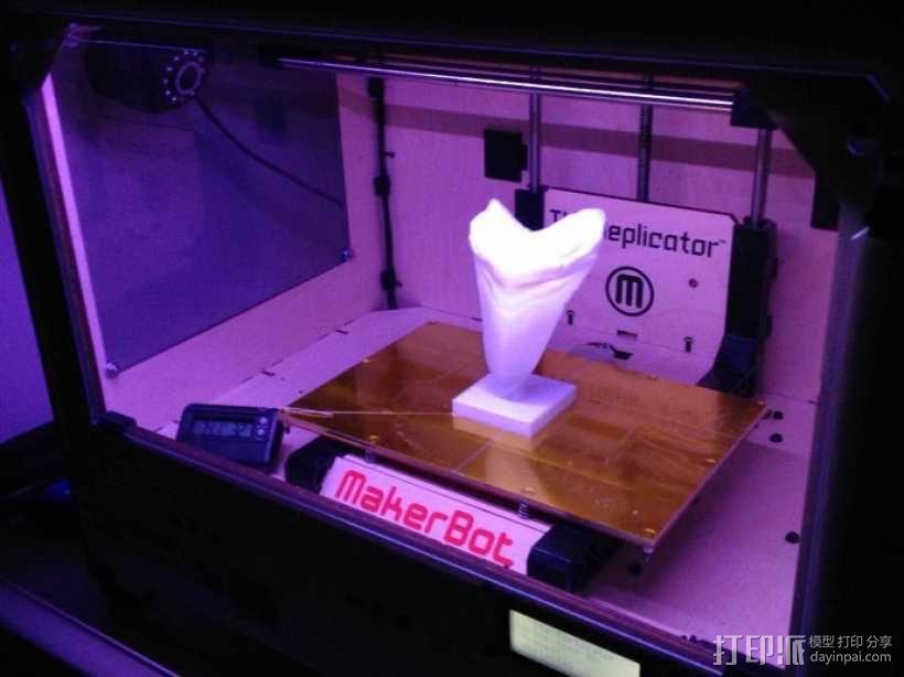 大鲨鱼牙齿 3D模型  图4
