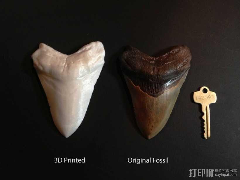 大鲨鱼牙齿 3D模型  图5