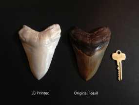 大鲨鱼牙齿 3D模型