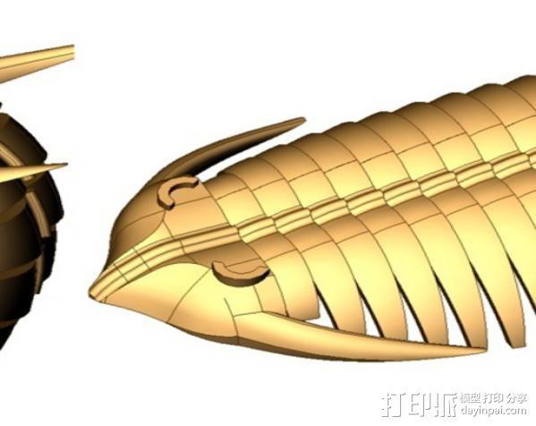 三叶虫 3D模型  图13