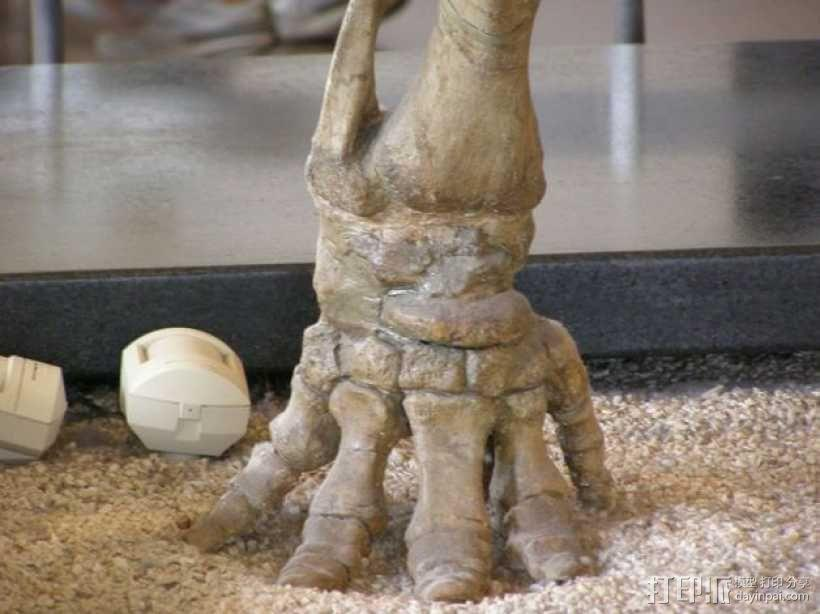 嵌齿象 足骨 3D模型  图2
