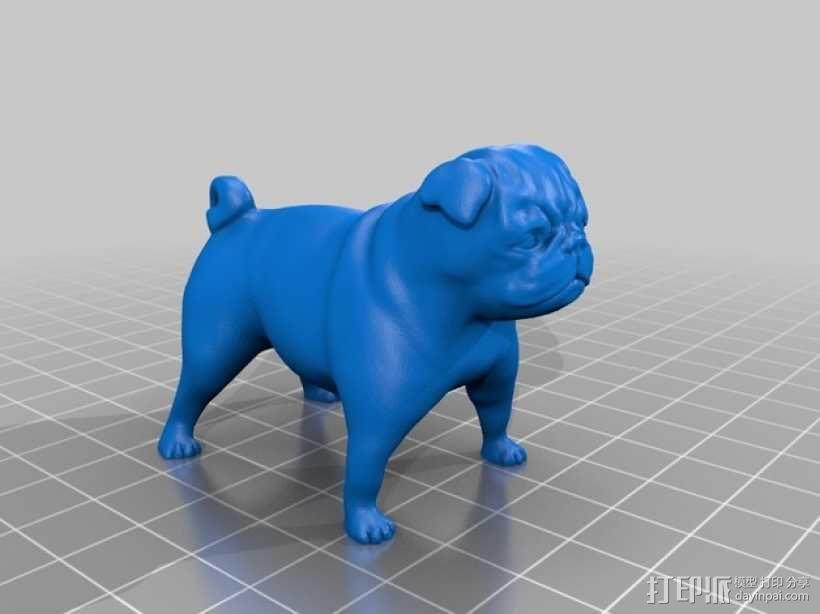 八哥犬 3D模型  图2