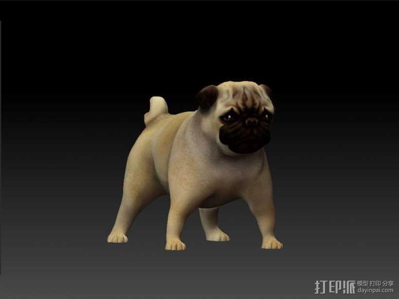 八哥犬 3D模型  图6