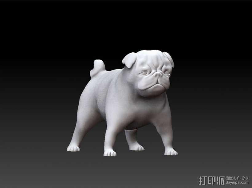 八哥犬 3D模型  图5