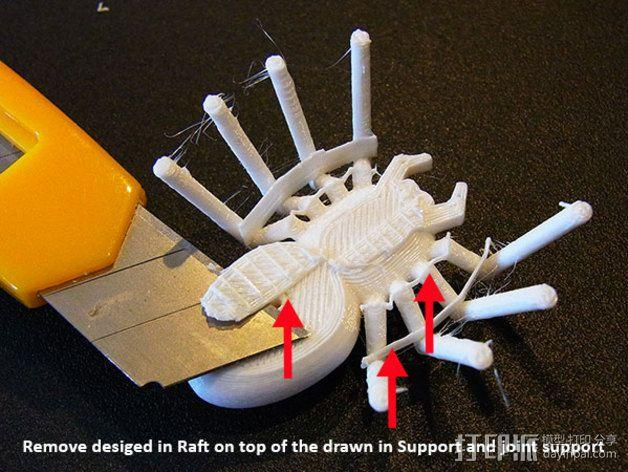 蜘蛛 3D模型  图6
