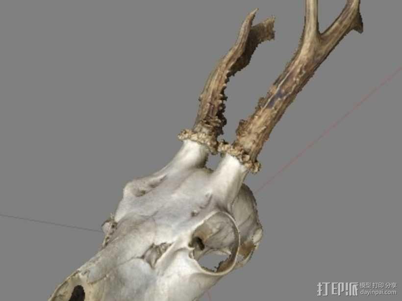 鹿头骨 3D模型  图1