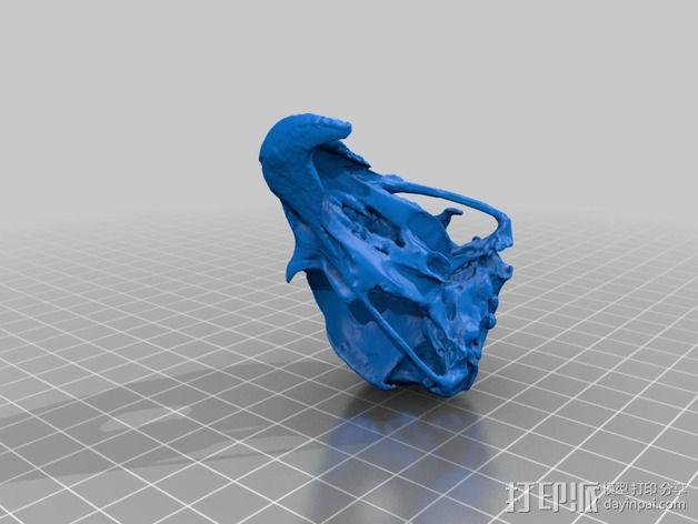 鱼鹰头骨 3D模型  图3