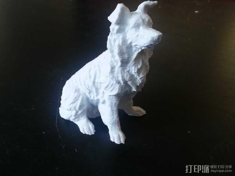 柯利牧羊犬 3D模型  图1