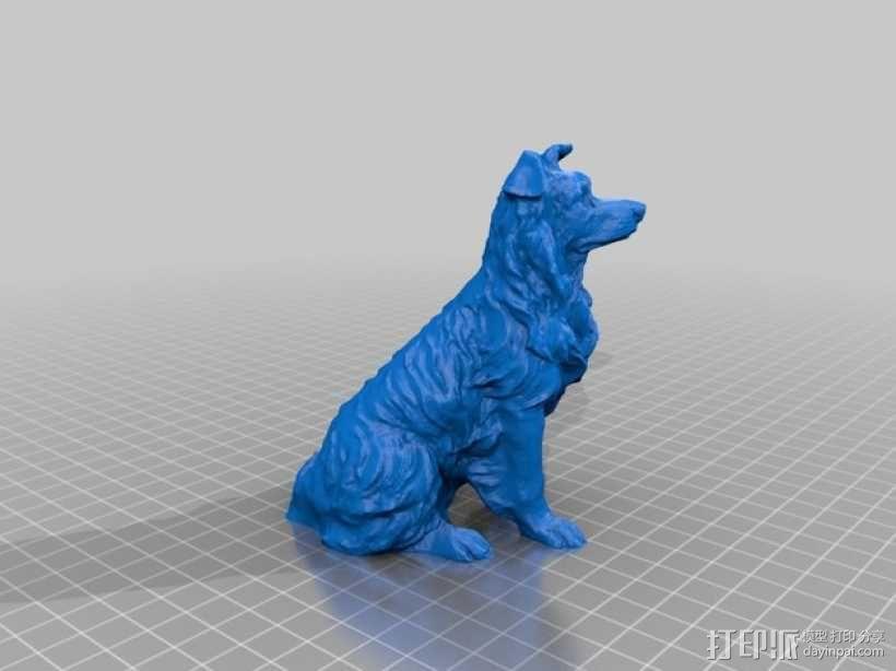 柯利牧羊犬 3D模型  图2
