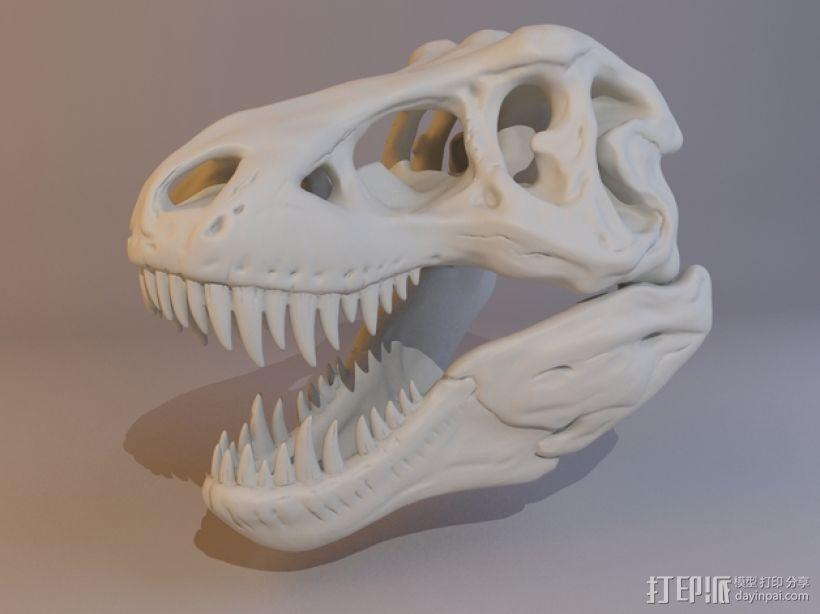 霸王龙头骨 3D模型  图7