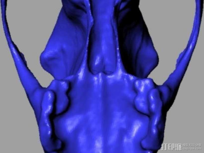 德国牧羊犬头骨 3D模型  图5