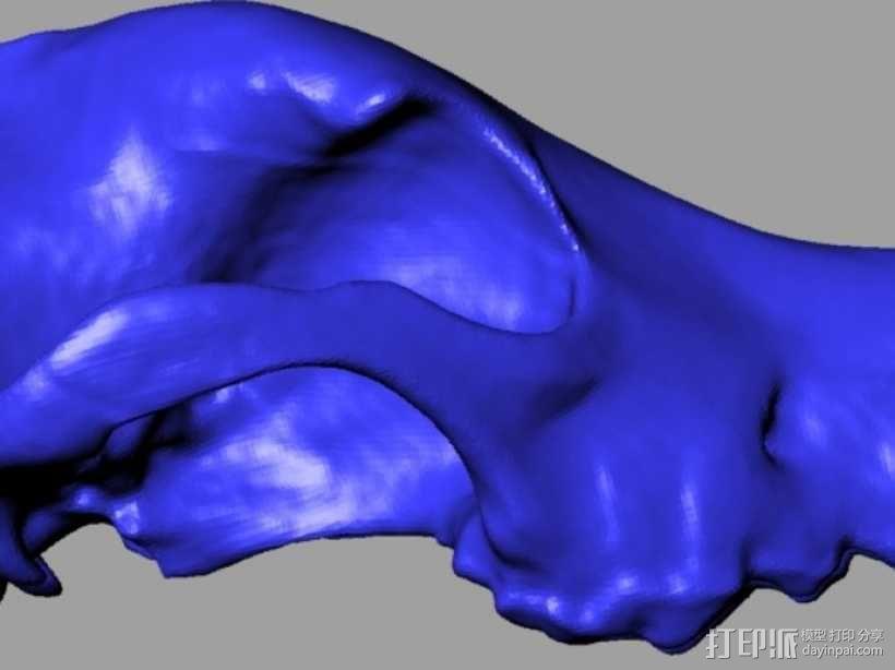 德国牧羊犬头骨 3D模型  图3
