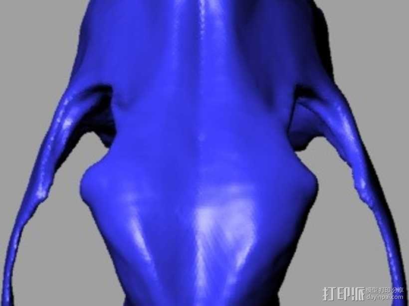 德国牧羊犬头骨 3D模型  图4