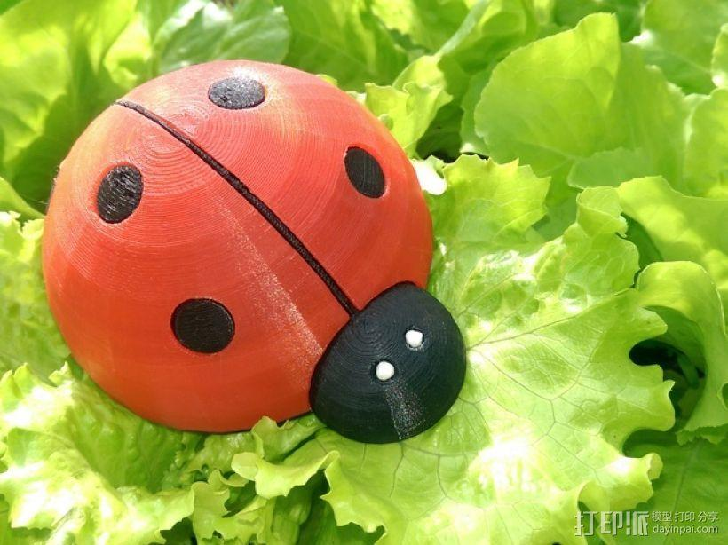 瓢虫  3D模型  图1