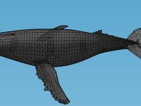 座头鲸 3D模型