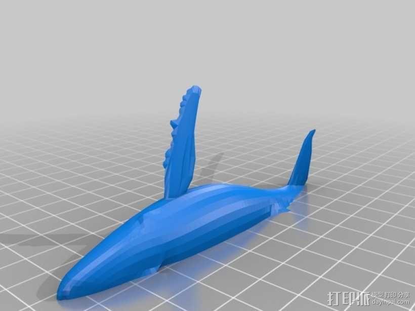 座头鲸 3D模型  图2