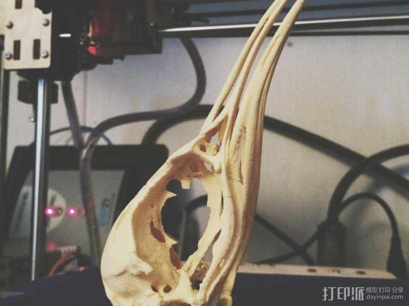 皇帝企鹅头骨模型 3D模型  图2