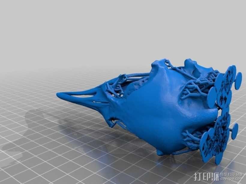 皇帝企鹅头骨模型 3D模型  图4