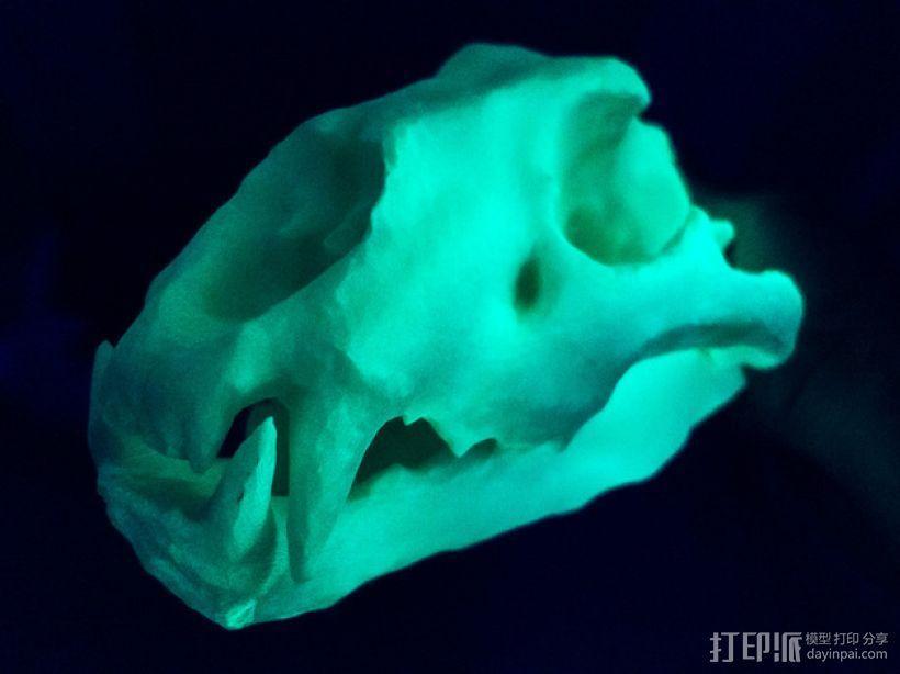 狮子头骨 3D模型  图2