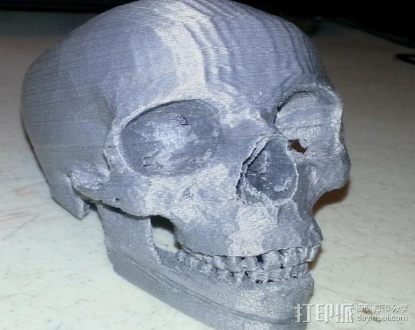 人头头骨 3D模型  图10