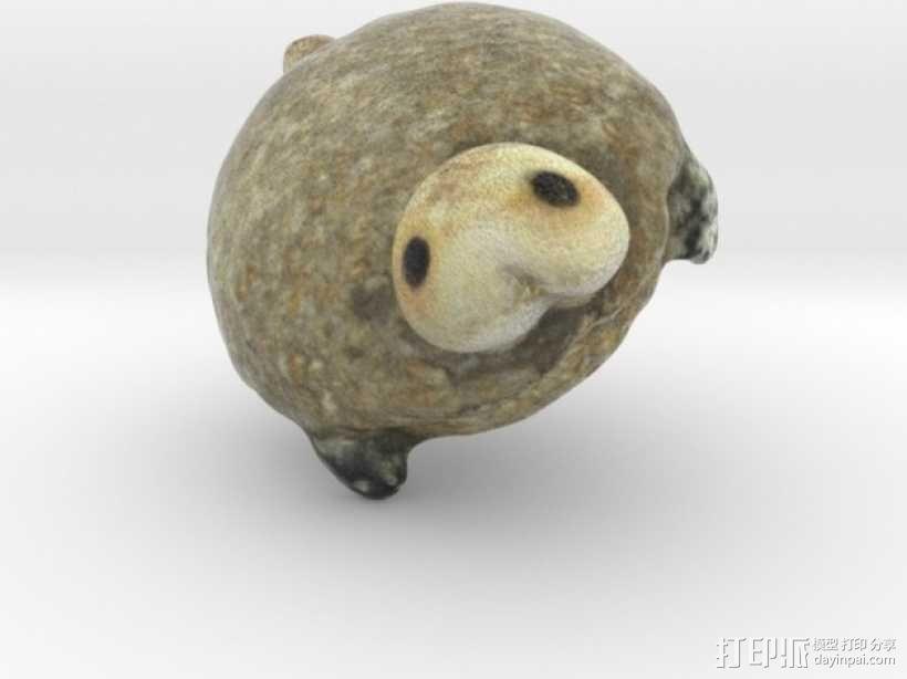 海龟  3D模型  图5