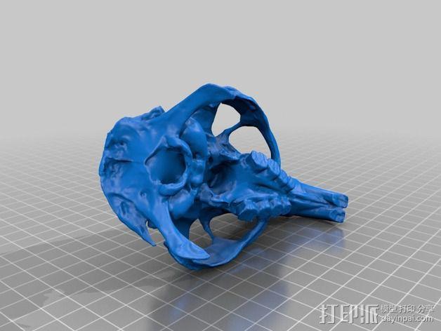 海狸鼠头骨 3D模型  图3