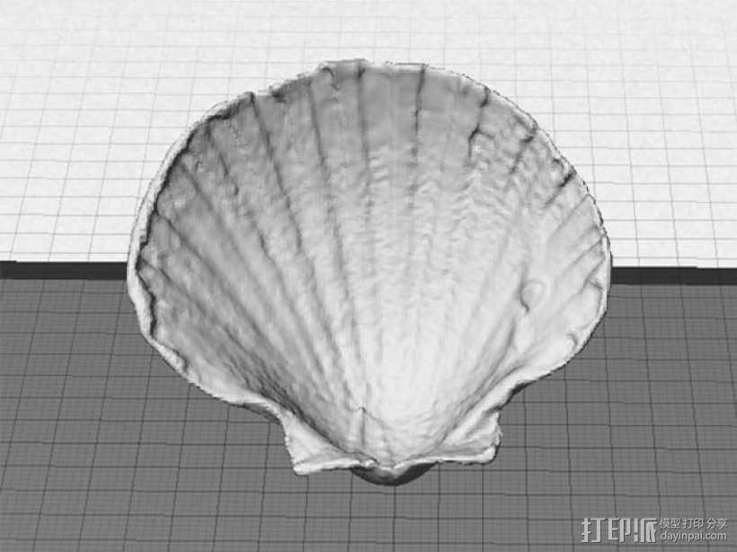 海贝壳 3D模型  图1