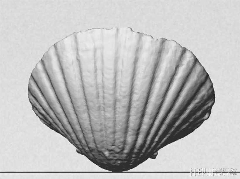 海贝壳 3D模型  图4