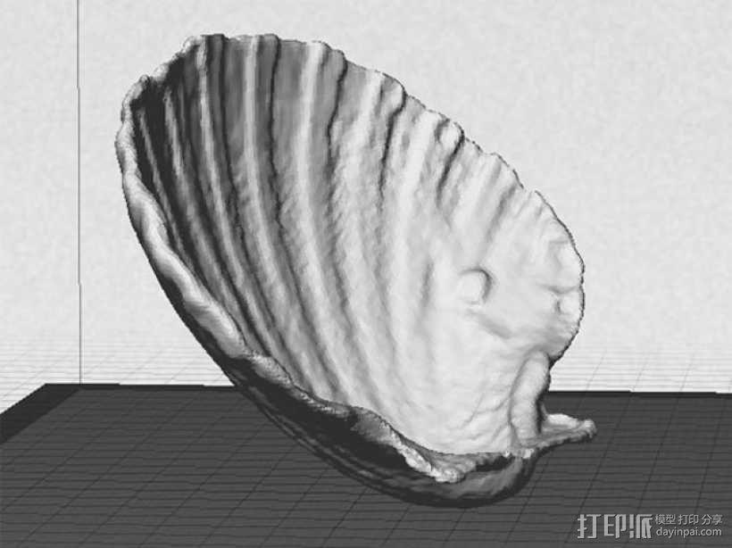 海贝壳 3D模型  图3