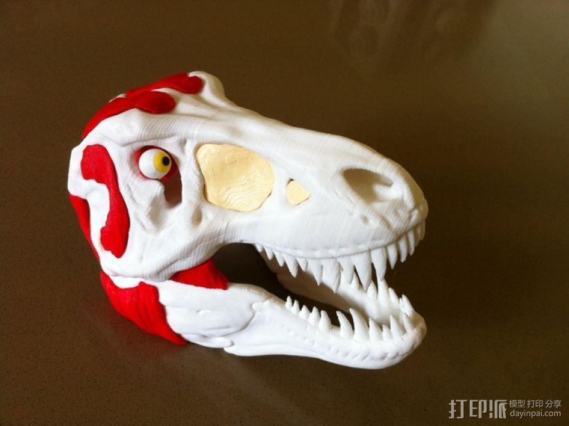 霸王龙头部肌肉组织 3D模型  图1