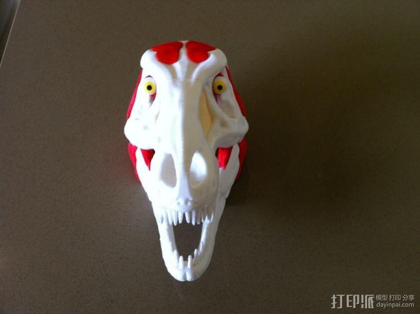霸王龙头部肌肉组织 3D模型  图4