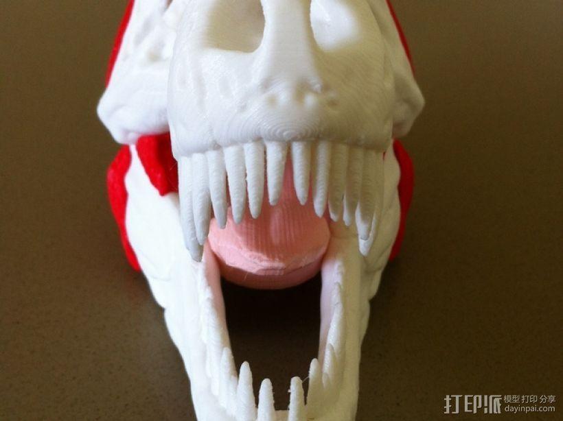 霸王龙头部肌肉组织 3D模型  图2