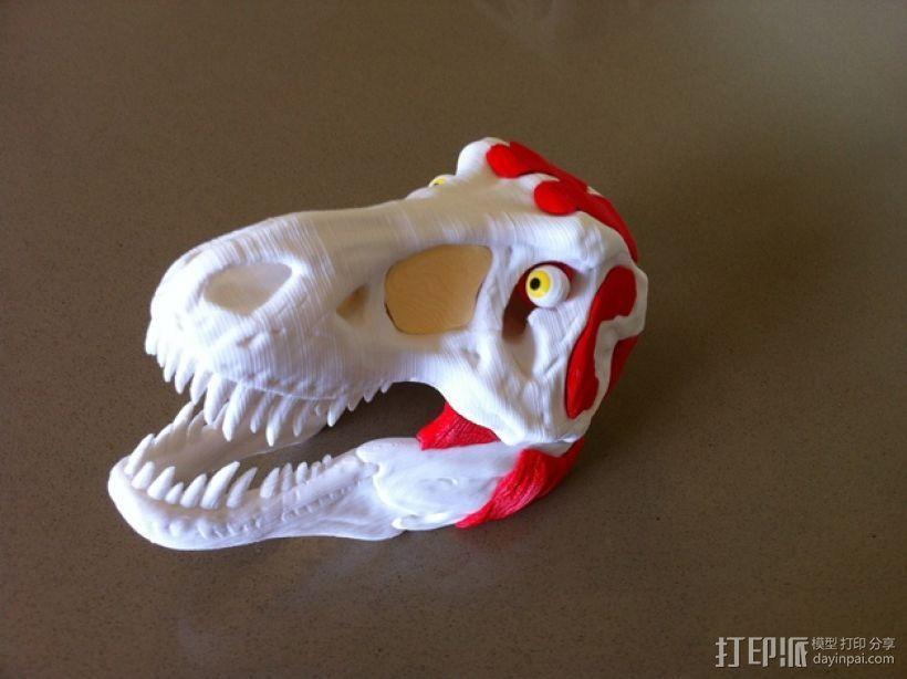 霸王龙头部肌肉组织 3D模型  图5