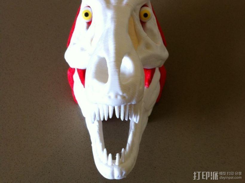 霸王龙头部肌肉组织 3D模型  图7