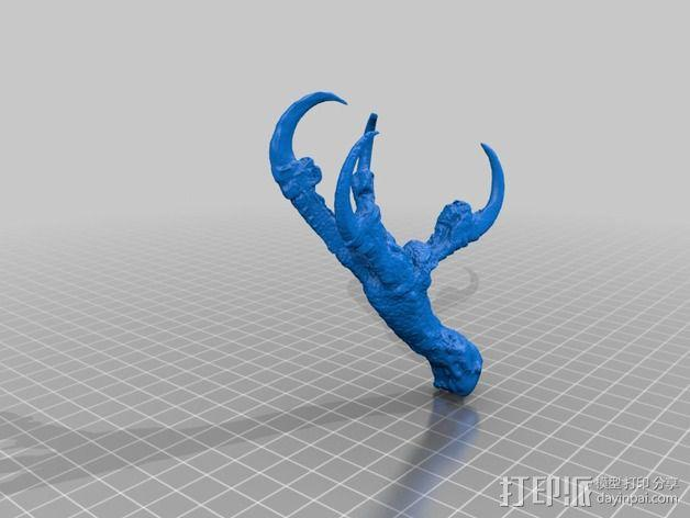 鱼鹰的脚爪 3D模型  图2