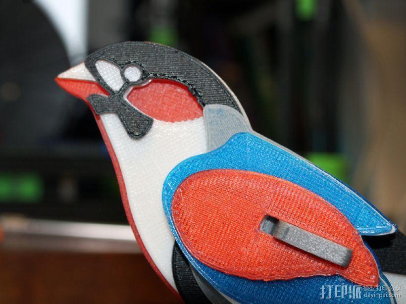 七彩鸟 3D模型  图1