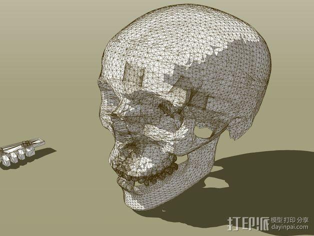 头骨  3D模型  图2