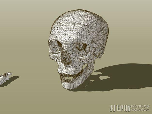 头骨  3D模型  图3