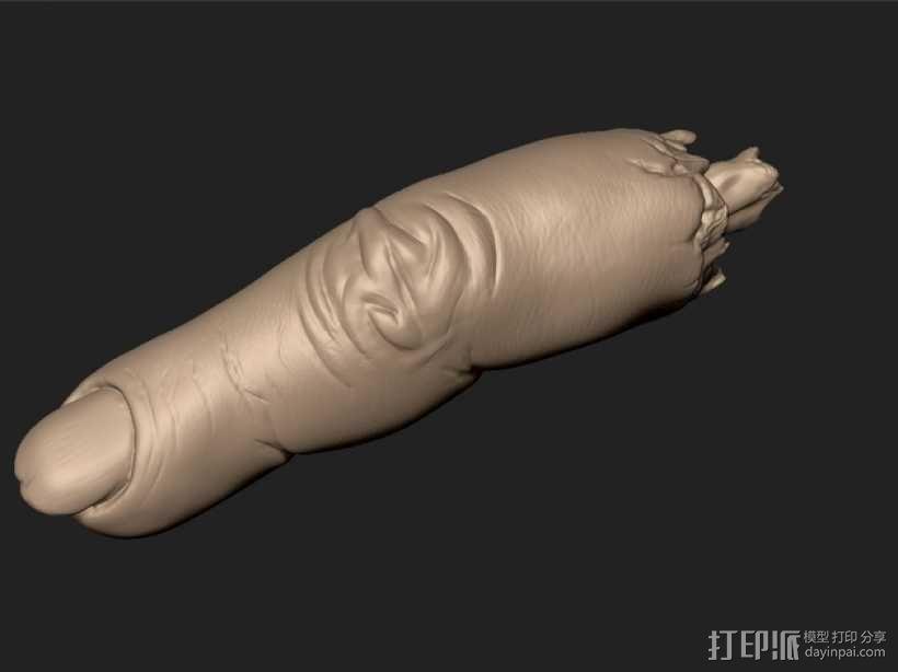 手指 3D模型  图1