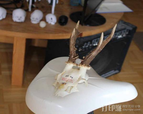 袍子头骨模型 3D模型  图3