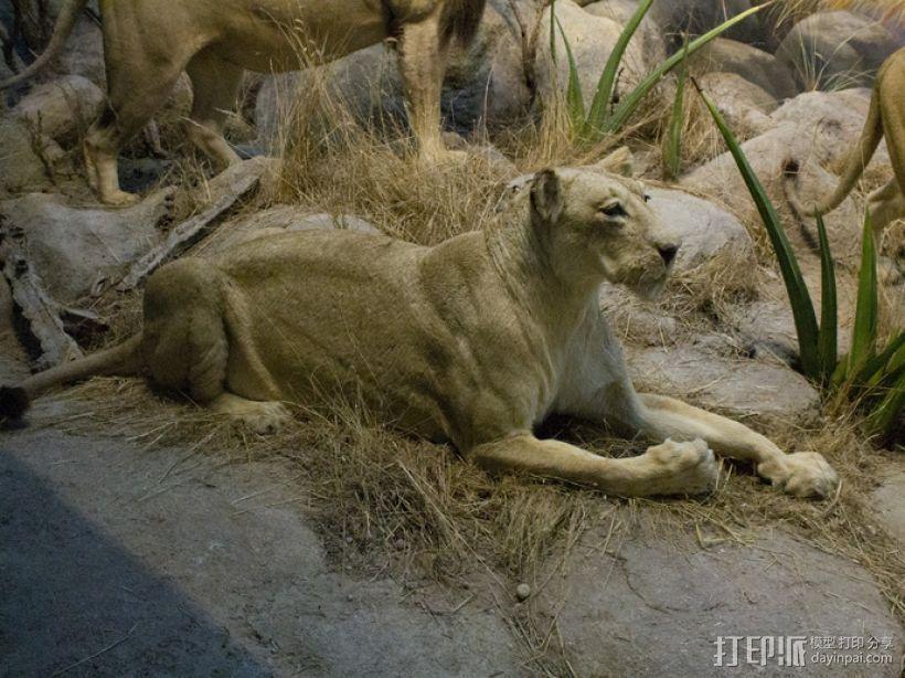 狮子 3D模型  图4